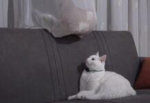 Gatto su un divano