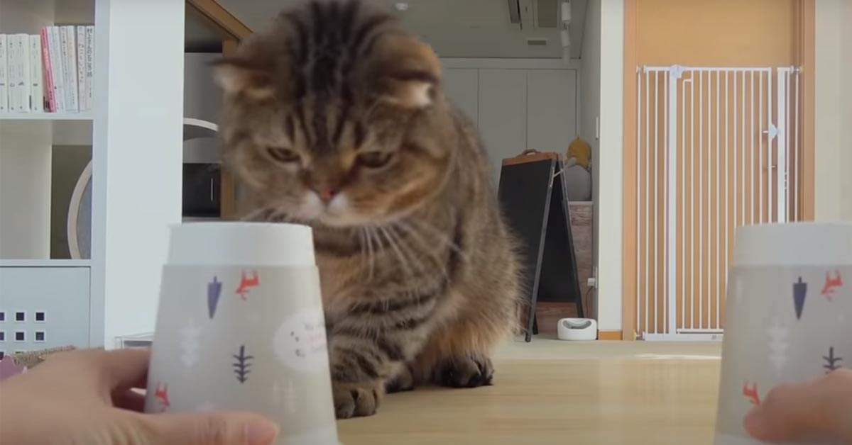 Gattino di fronte a dei bicchieri