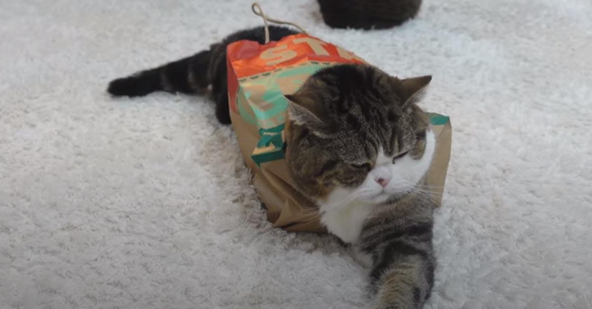 Gatto in un sacchetto