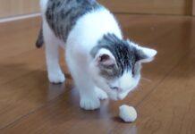 Gatto con una palla di neve