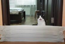 Gatto contro un muro di carta igienica