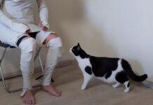 Gatto con una mummia