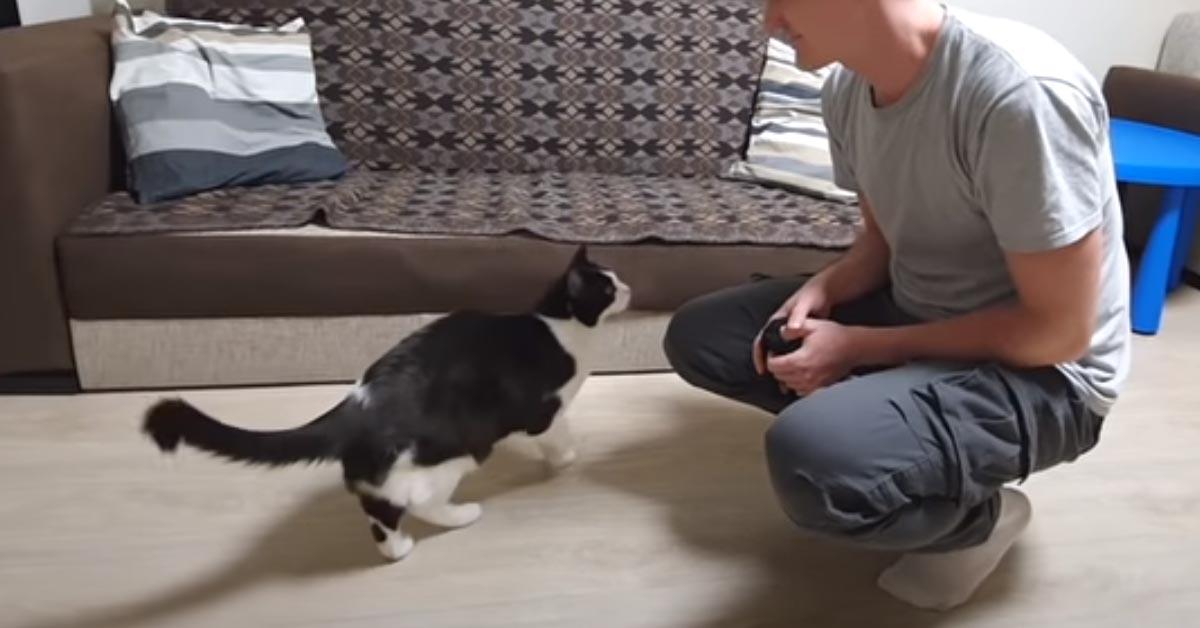 Gattino con il proprietario