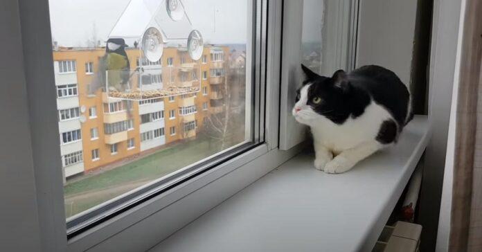 Gatto che guarda degli uccellini