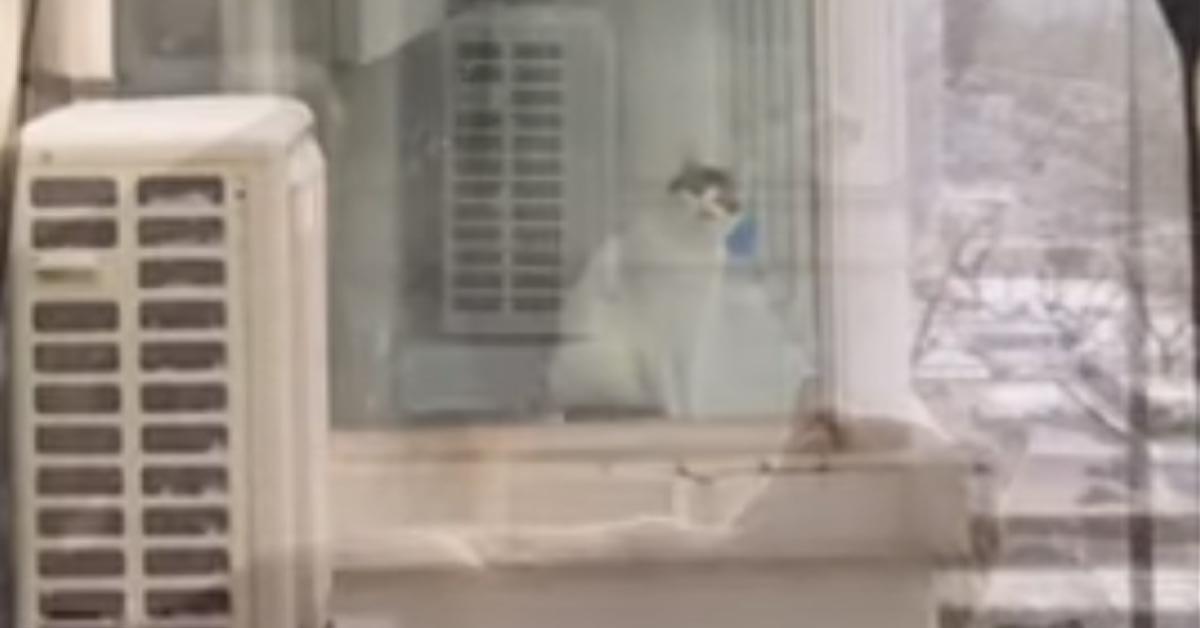 Gatto che osserva dalla finestra