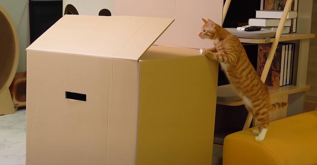 Gatto che osserva dentro ad una scatola