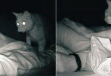 gattino padrona video