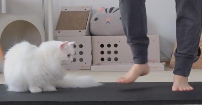 Gattino su un tappetino