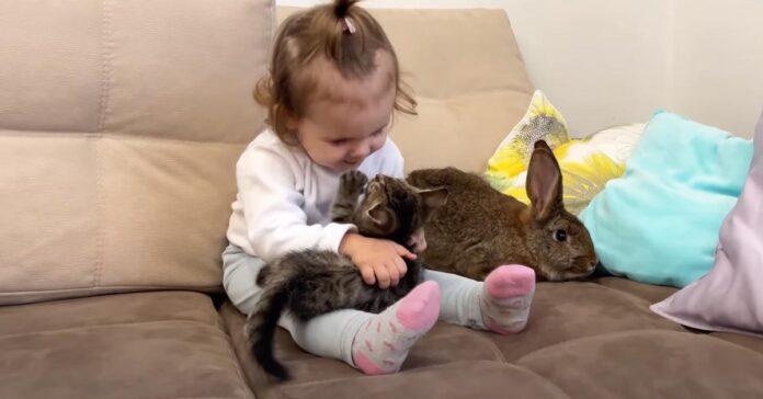Gatto gioca con una bambina e un coniglio