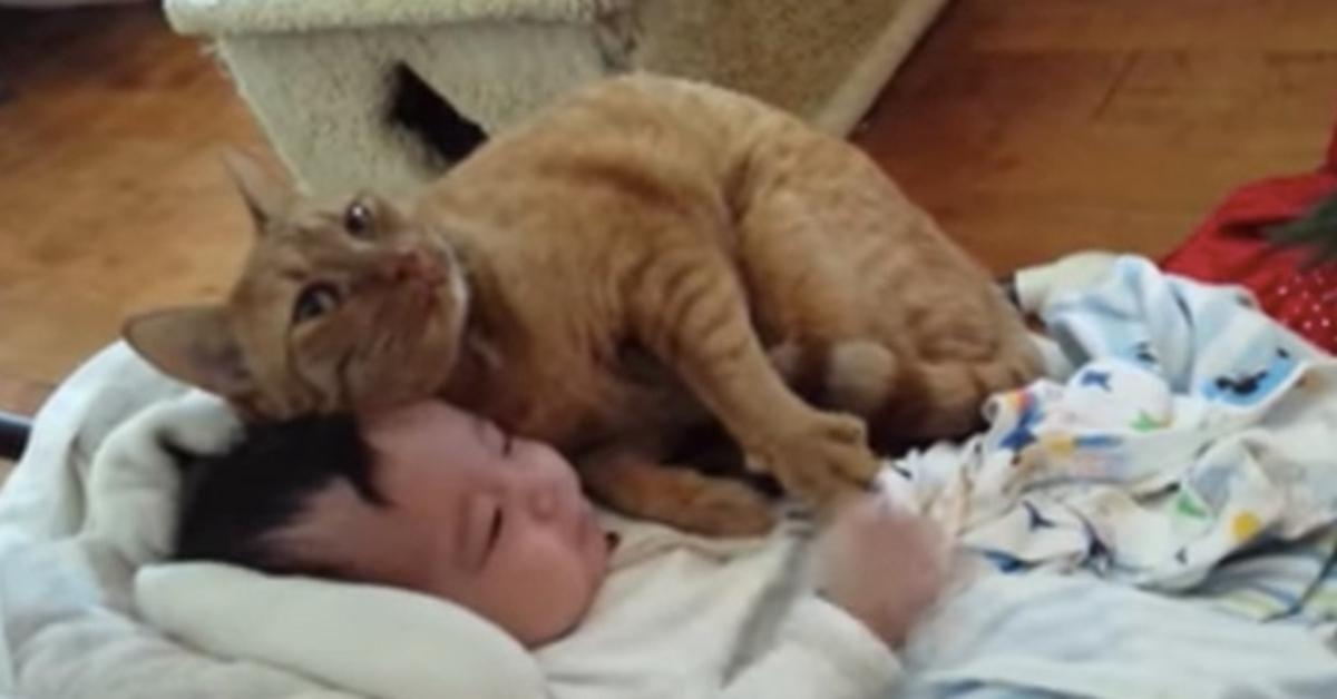 gattino neonato video