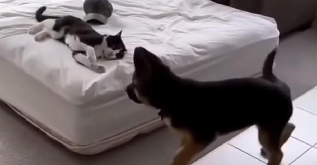 Gatto con cucciolo di Pastore Tedesco