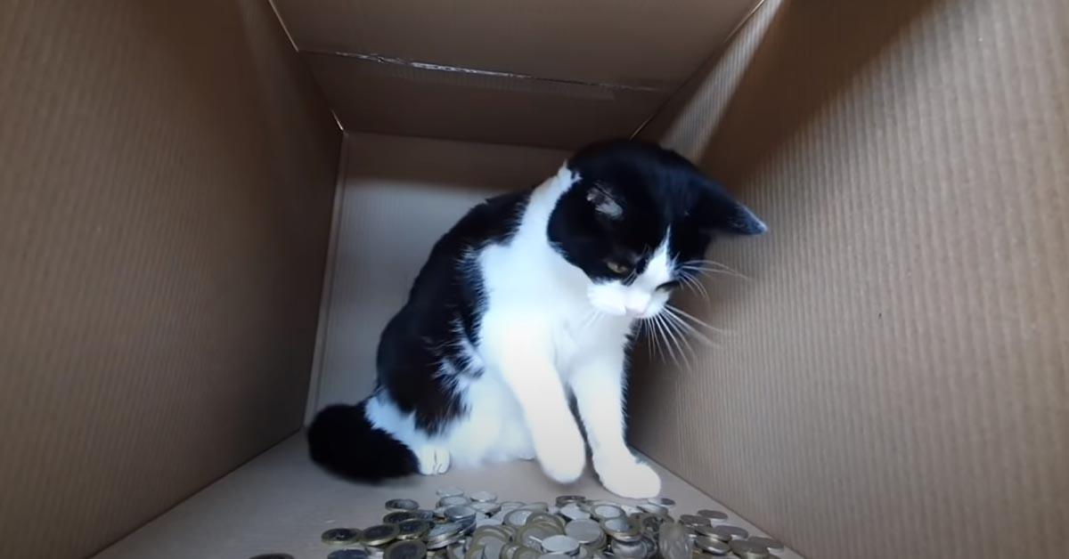 Gatto dentro ad una scatola