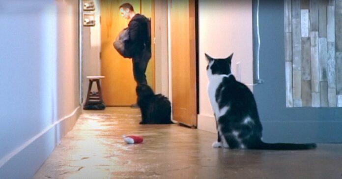 Kodi gattino video