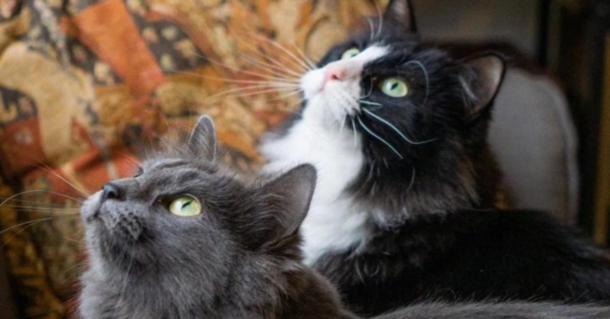 Keisha e Freya gattine sorelle video