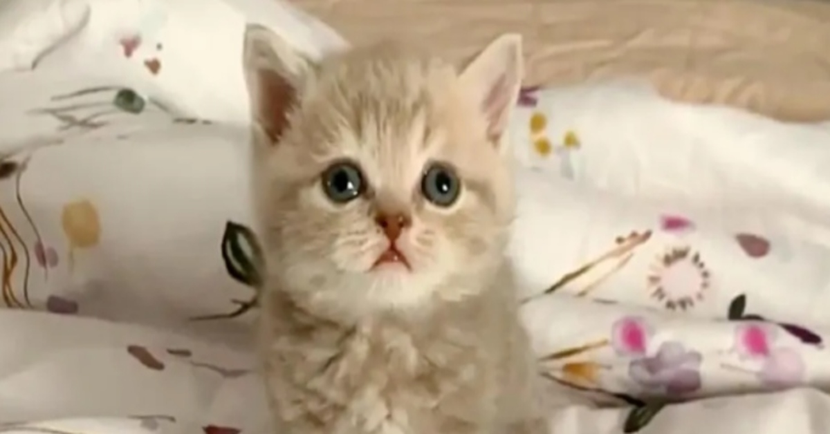 Mia gattina video