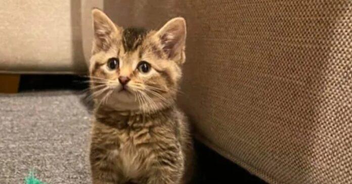 Lisa gattina soriano video