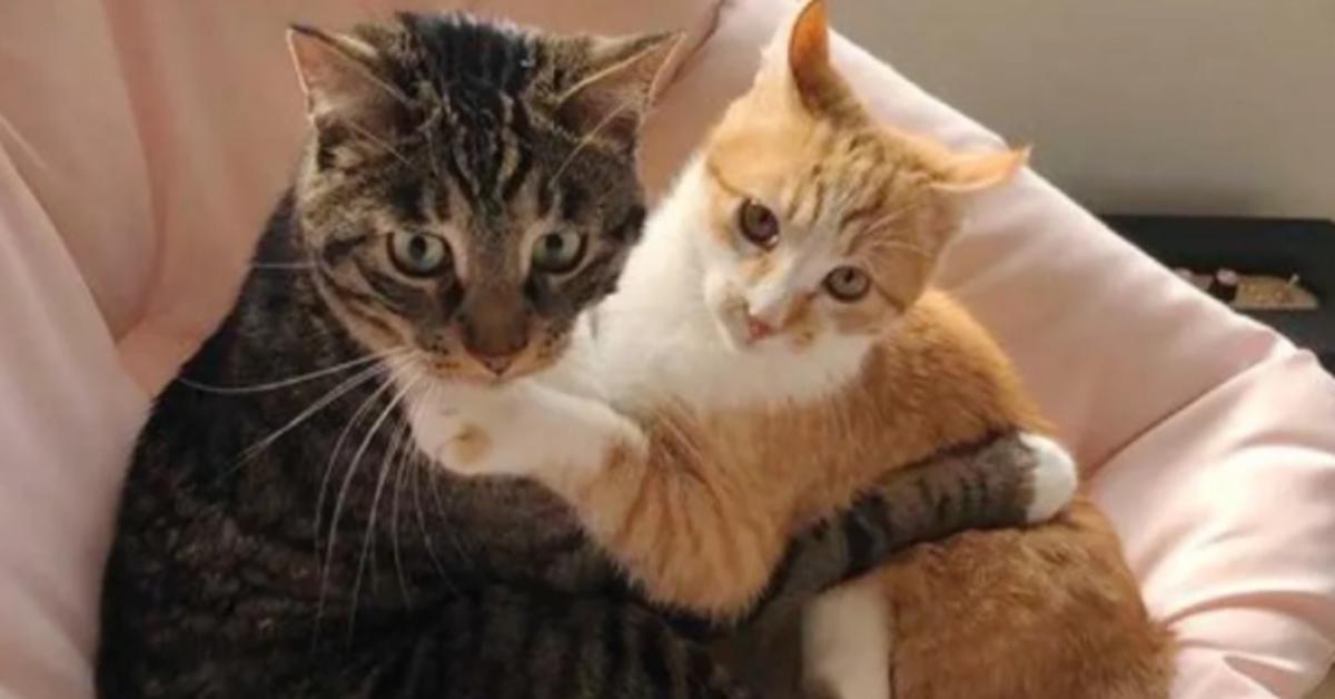 Pumpkin gattino soriano video