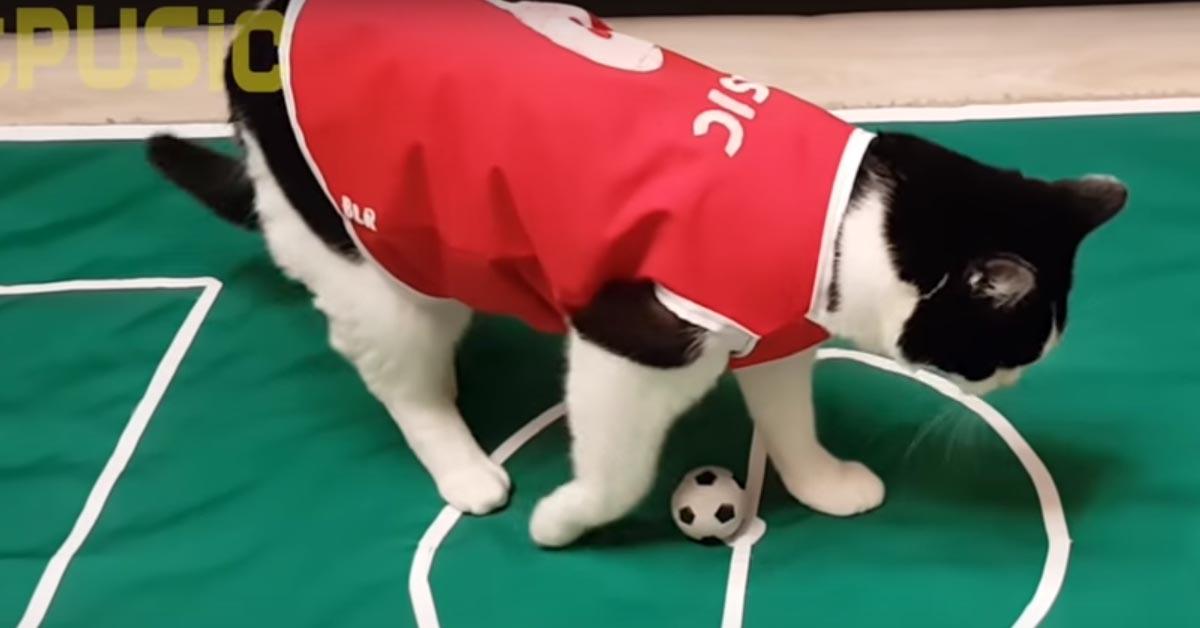 Gatto calciatore
