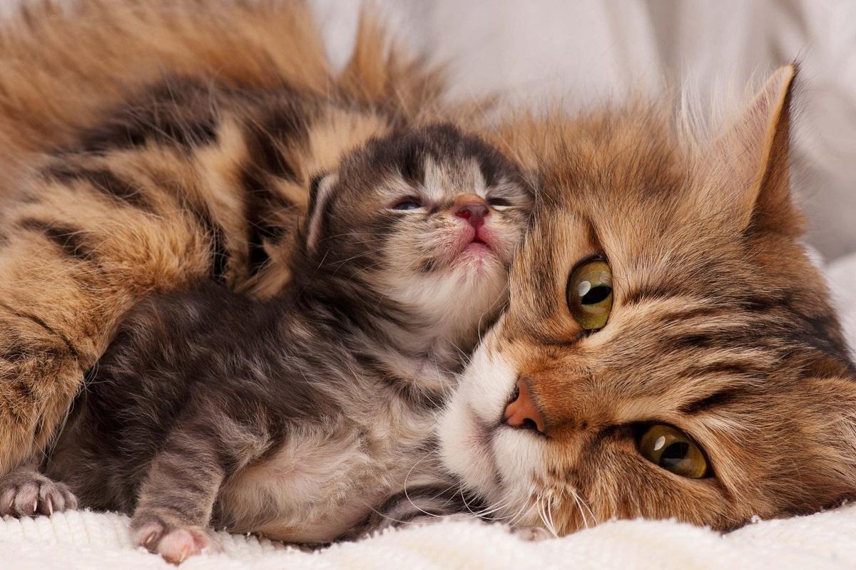 mamma gatta con cucciolo