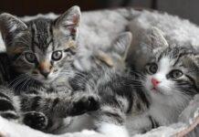 Gattini in una cuccia