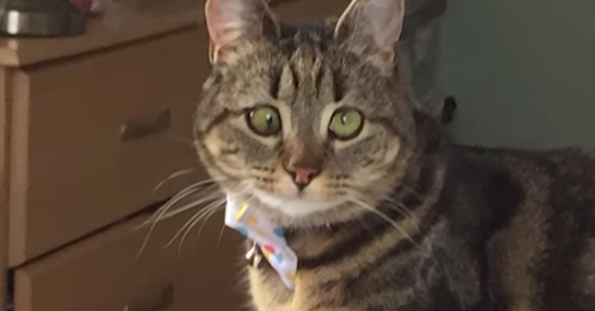 Gattino con gli occhi storti
