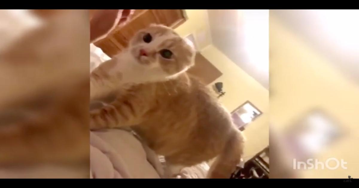 gatto terrorizzato dalla padrona con maschera di bellezza