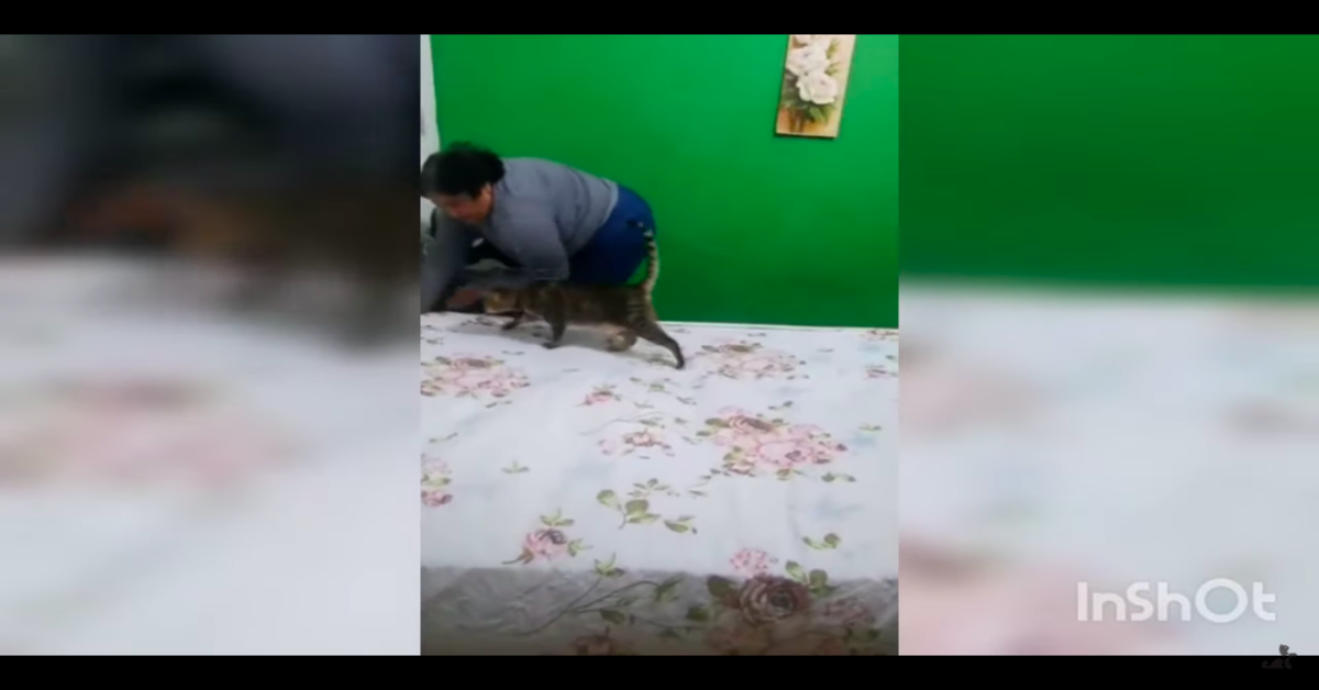 gatto disturba padrona che cerca di rifare il letto