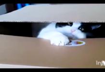 gatto dentro una scatola afferra moneta