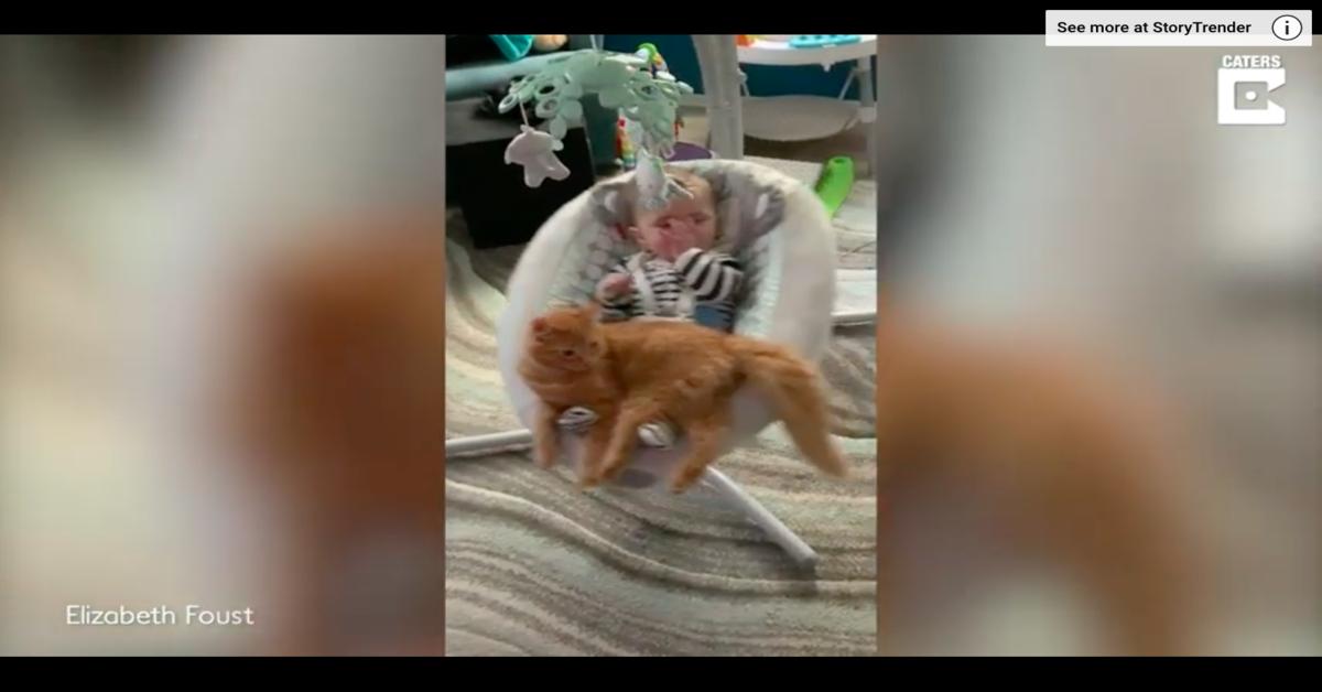 gatto sul dondolo si prende cura del bimbo