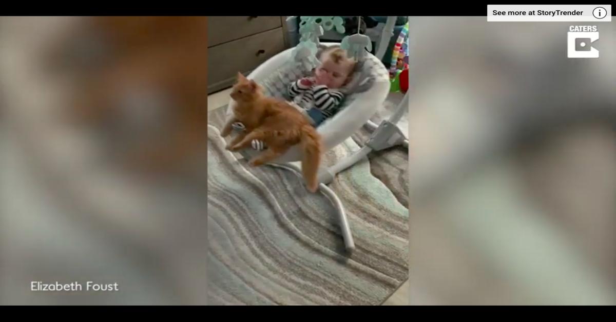 gatto insieme al bimbo sull'altalena