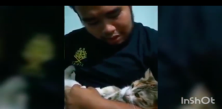 gatto in braccio al padrone