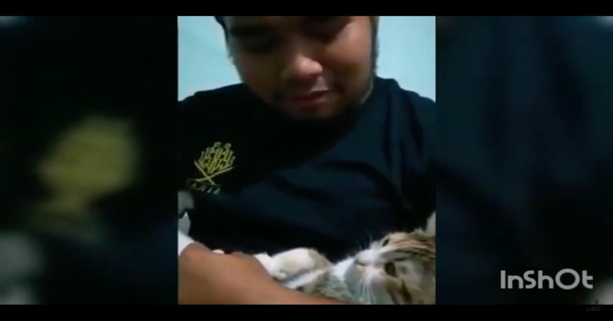 """gatto in braccio al padrone impara a dire """"mamma"""""""