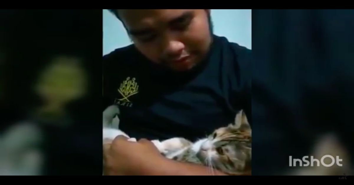 gattino in braccio al proprietario