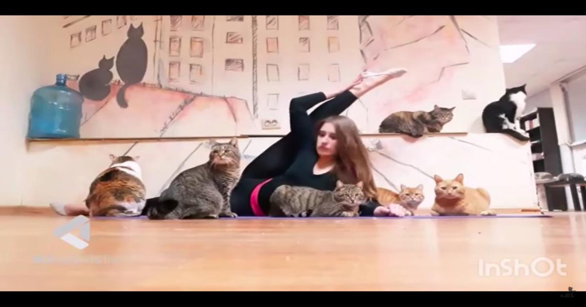 ballerina sul tappeto con gatti