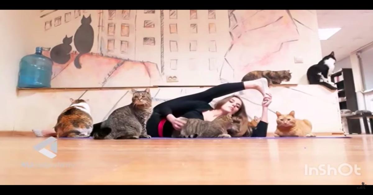 gatti rovinanano coreografia ballerina