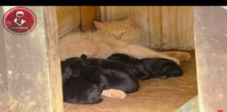 Miss Kitty con cuccioli di cane