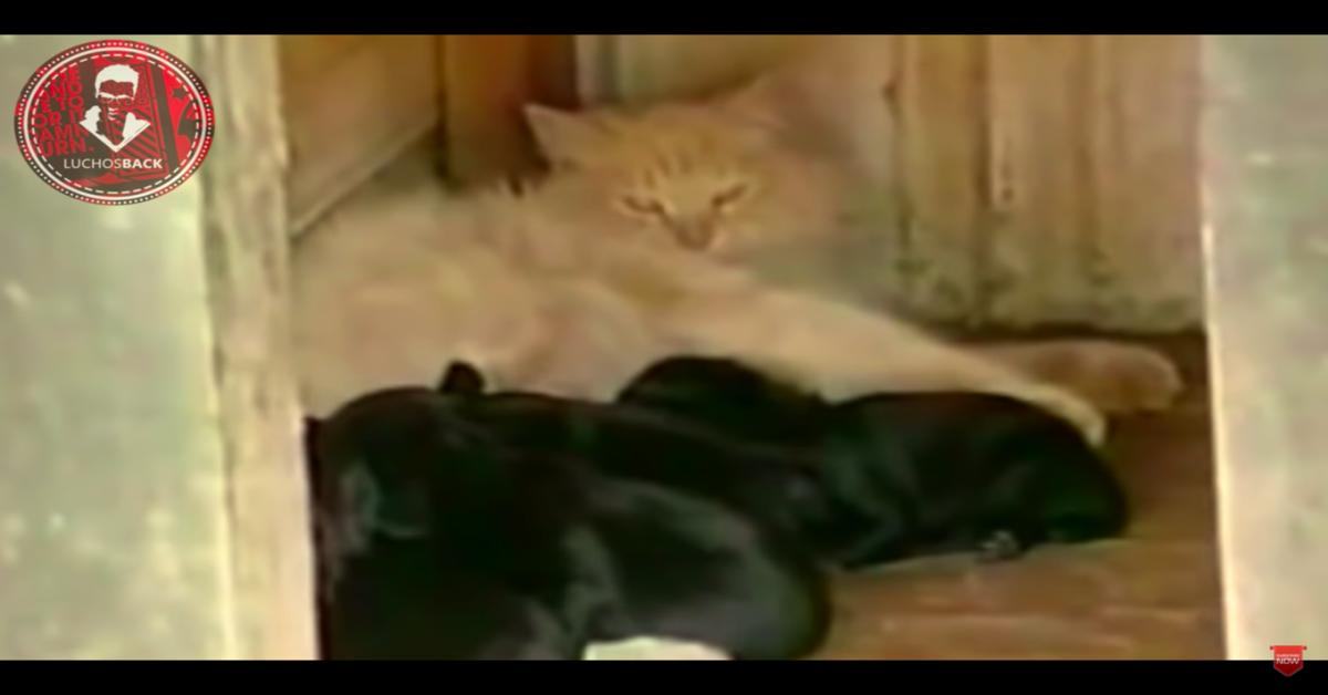 Miss Kitty ruba cuccioli Smookie