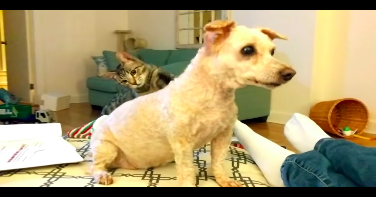 gatto non può credere che il cane tosato sia il suo amico