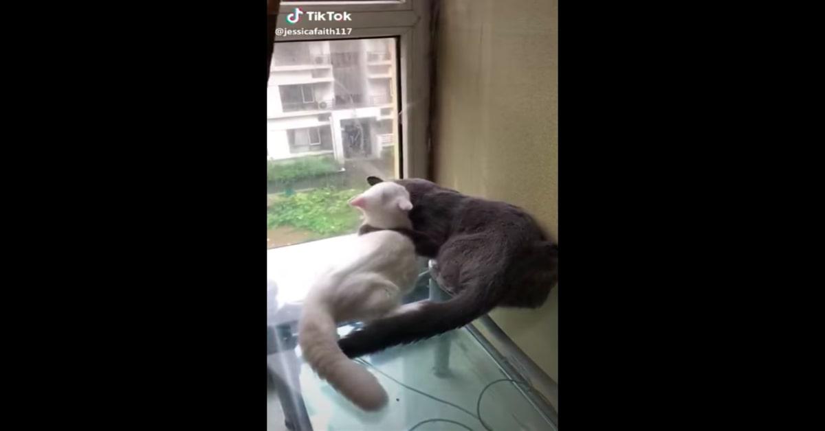 gatti si baciano teneramente