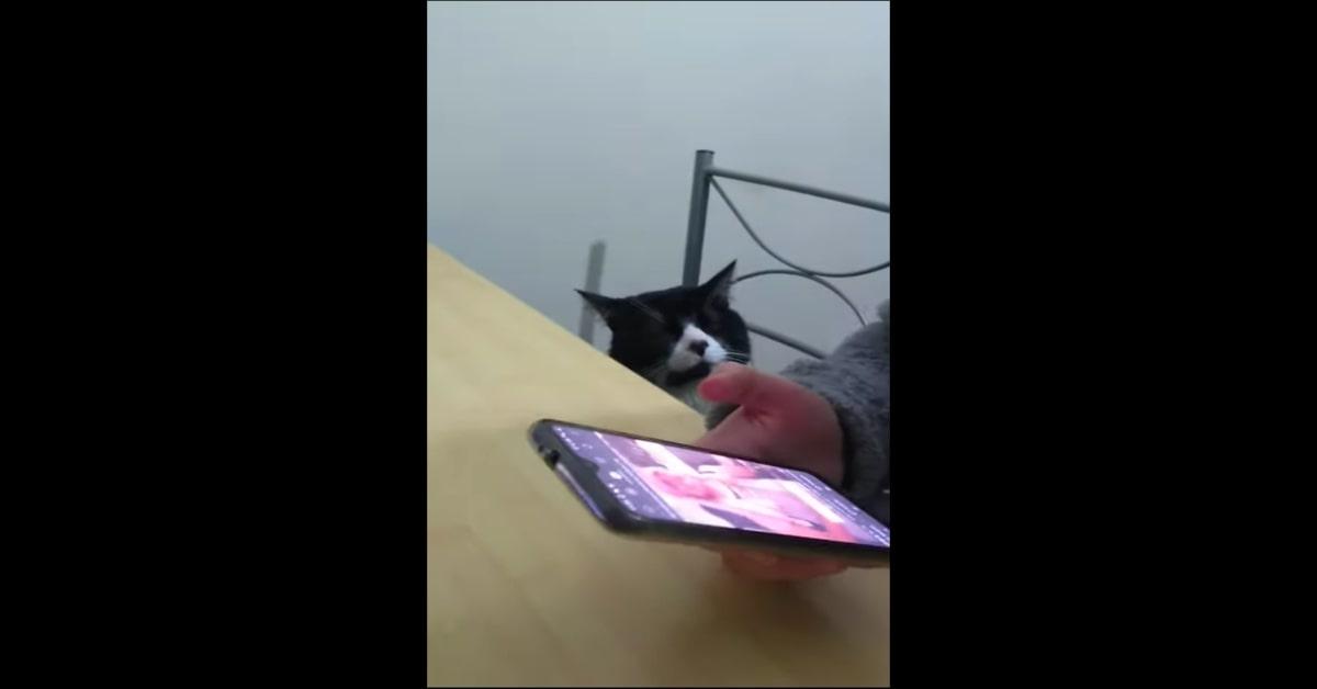 gatto ascolta emozionato la padrona che canta