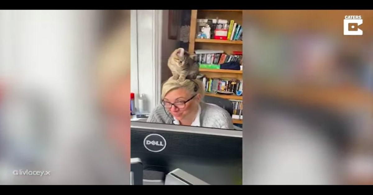 gatto si addormenta sopra la testa di Kellie
