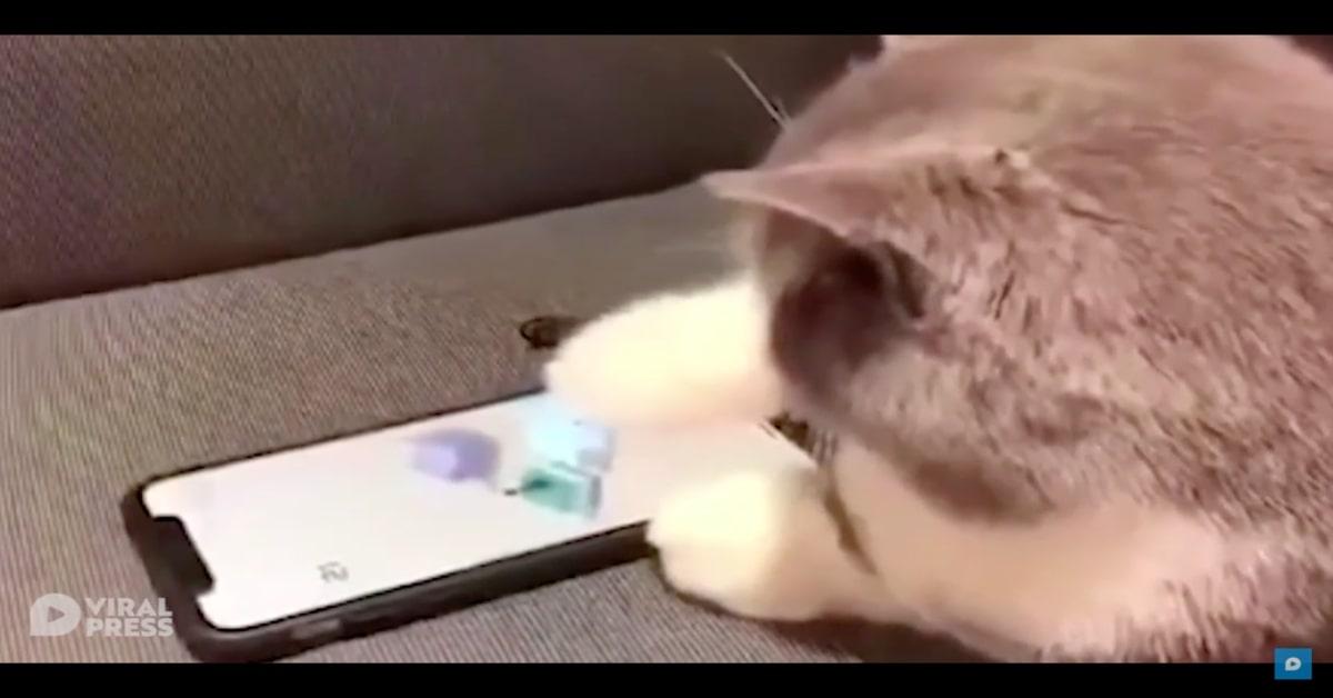 gatto impegnato con i videogiochi