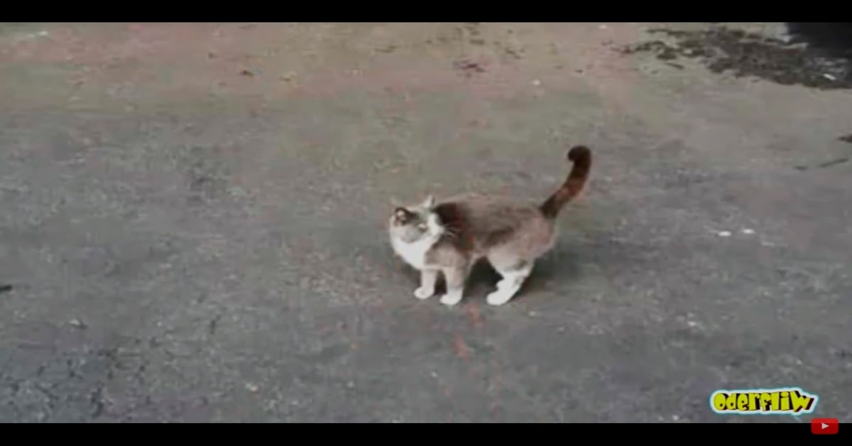gatto uscito dal container