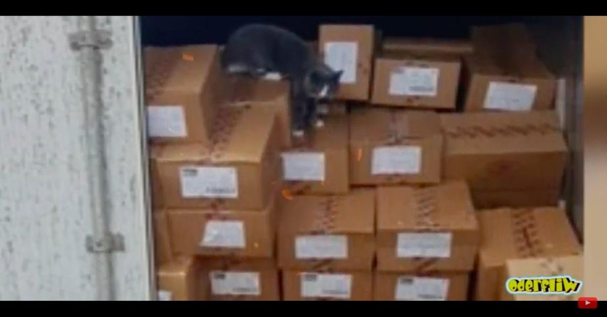 gatto dentro al container