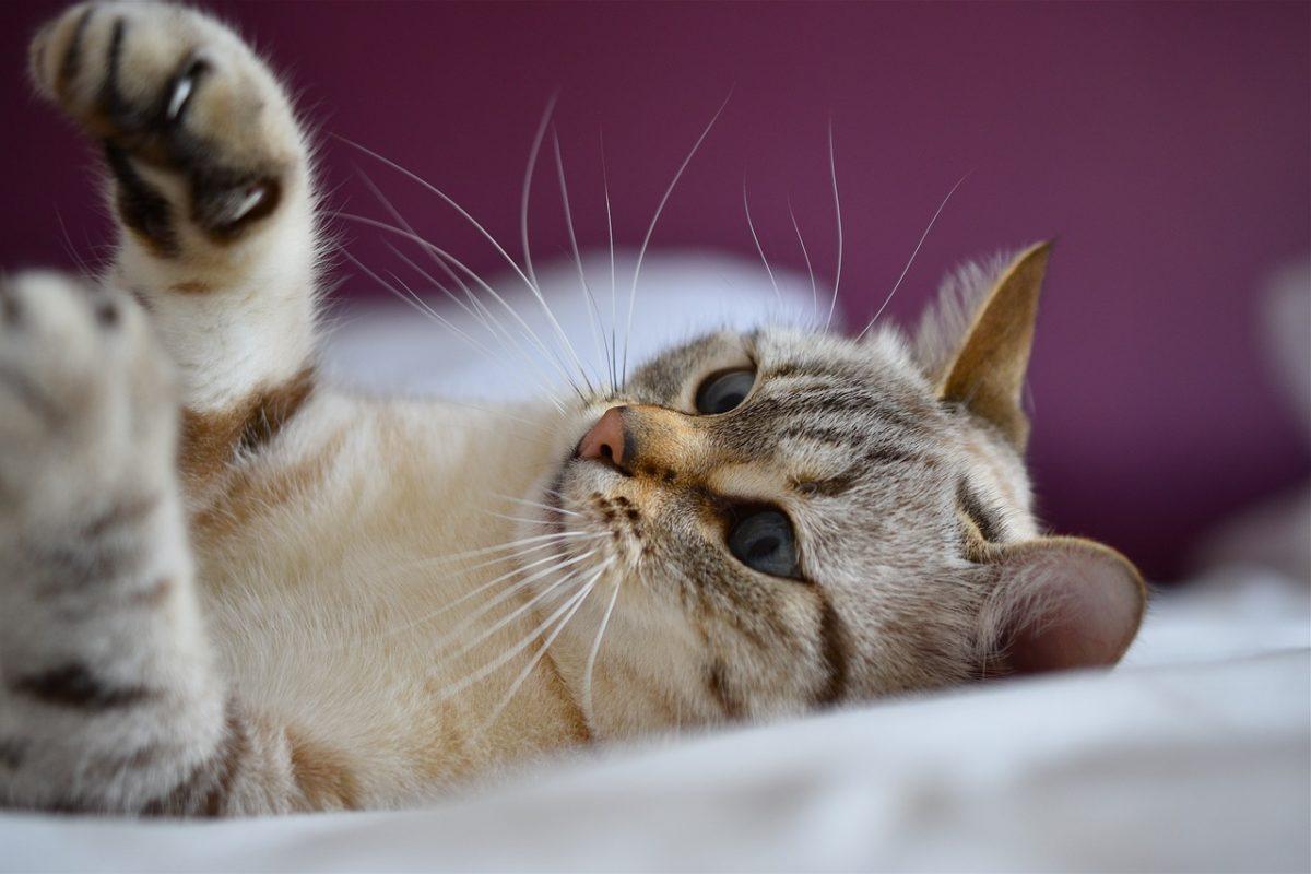 gatto che interagisce