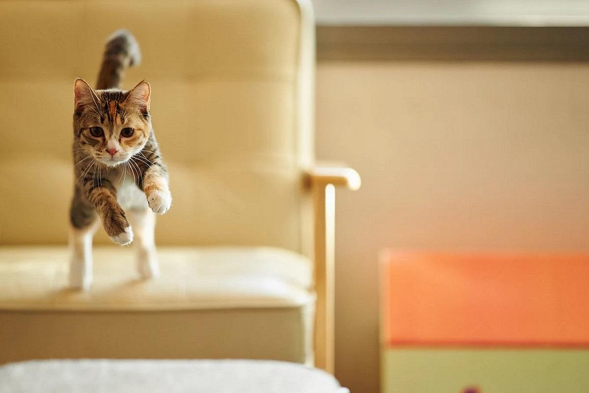 gatto salta dalla portrona