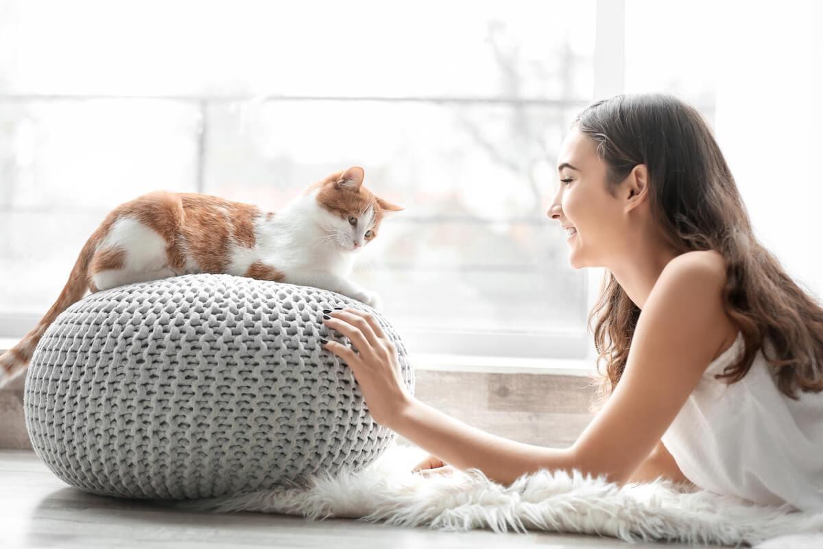 rapporto stabile con il gatto