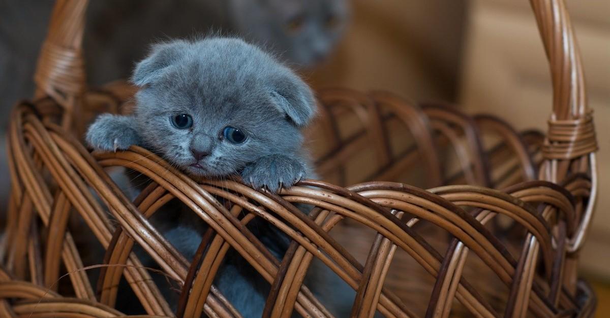 gattino piange se resta solo