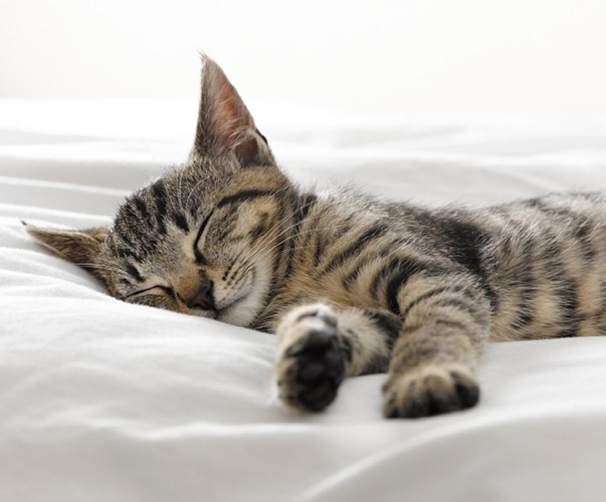 gattino respirazione artificiale consiglio