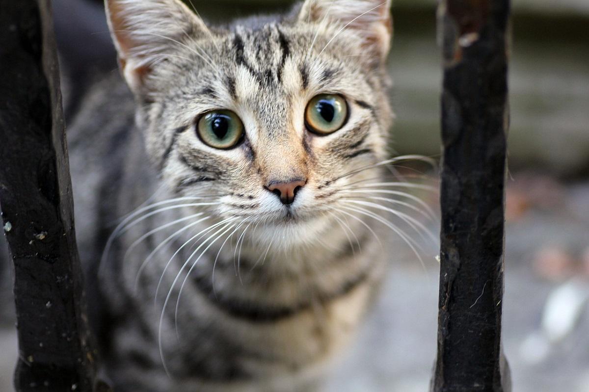 linguaggio visivo gatto